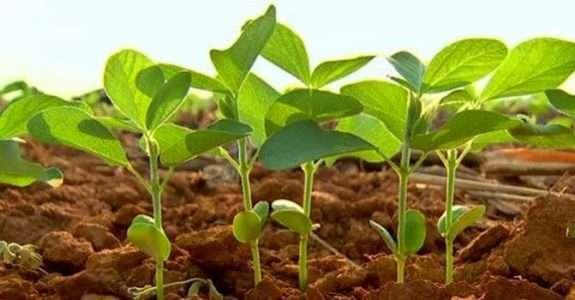 Análise do solo, primeiro passo para produzir