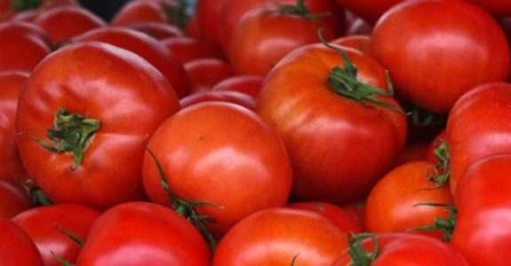 Agricultura orgânica: Regulamentos técnicos da produção animal e vegetal