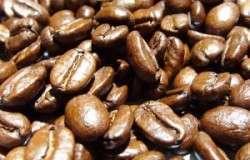 Ocorrência de seca de ramos em cafeeiros cultivados em diferentes espaçamentos de plantio