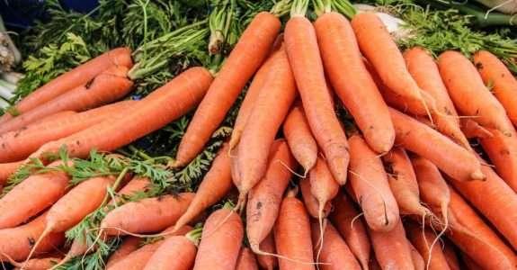 Leira estática aerada na produção de cenouras