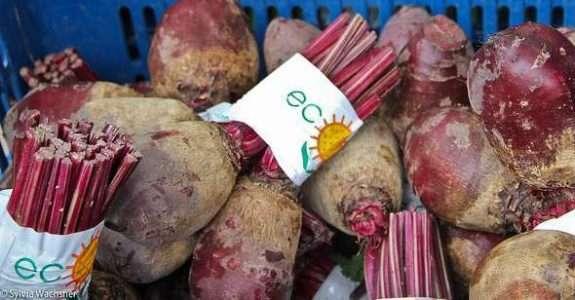 Estudo: produção orgânica na Bahia