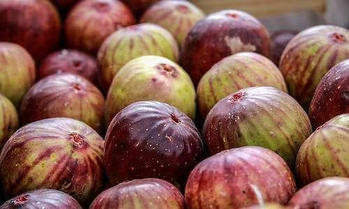 Manual de perdas pós-colheita em frutos e hortaliças