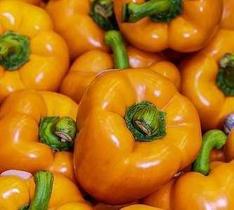 PR: Alimentos orgânicos e adesão à alimentação escola