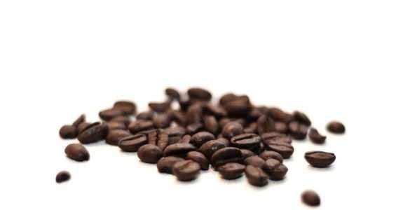 Cultivo de Café Orgânico