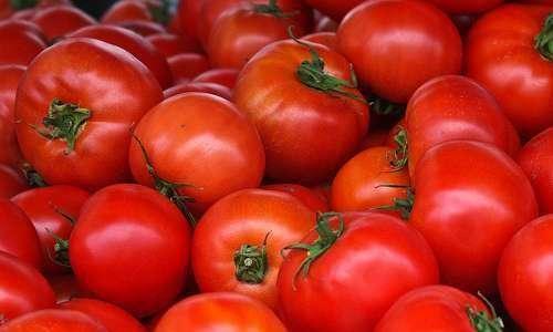 Inimigos naturais em tomate monocultivo e consorciado com coentro
