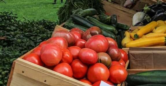 Seis vezes mais tomate orgânico