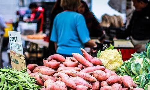 Fécula de batata-doce (Ipomoea batatas L.) orgânica e biofortificada