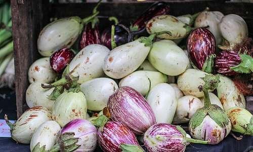 Orgânicos continuarão a poder ser produzidos com sementes convencionais