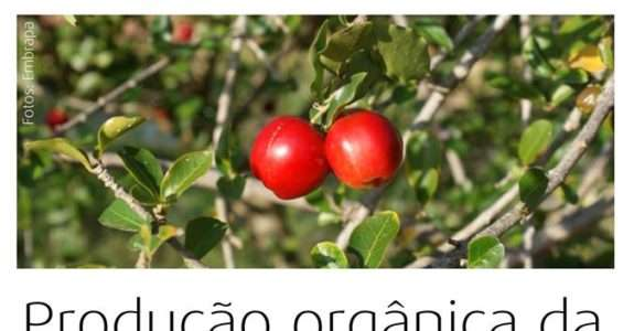 Acerola, Cultivar 366-Jaburu