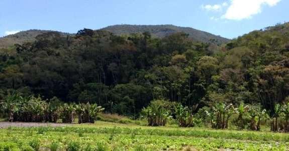 Adubação biológica melhora os solos