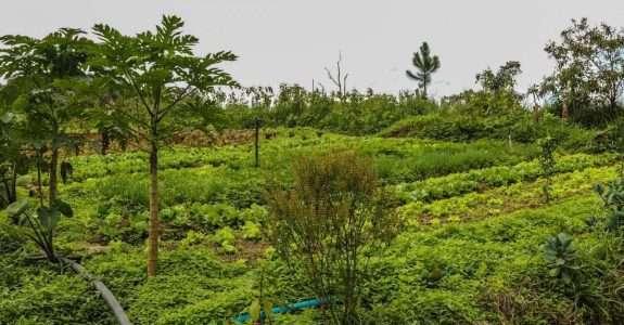Prácticas agroecológicas na agricultura familiar