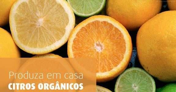 Como produzir citros orgânicos?