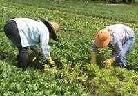 Fapesp investiga inovação tecnológica na agricultura orgânica