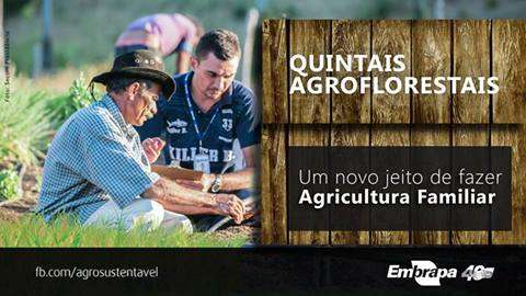 Quintais agroflorestais: novo jeito de fazer agricultura familiar