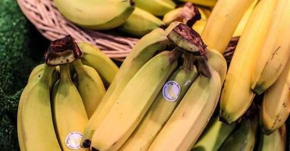 Análise da produção de banana orgânica