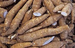 Mandioca substitui isopor em embalagem sustentável