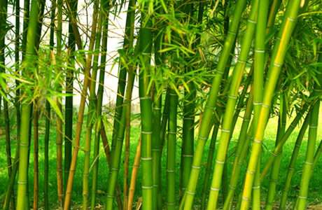 Estufa ecológica produzida com bambu