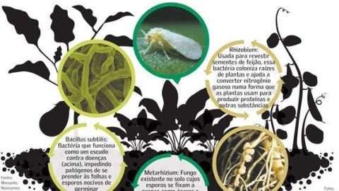 esquema pesticidas