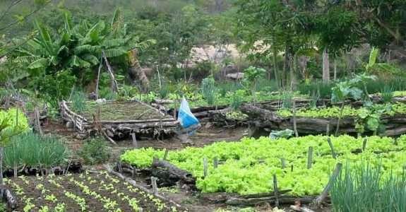 Cartilha agroecológica de produção familiar