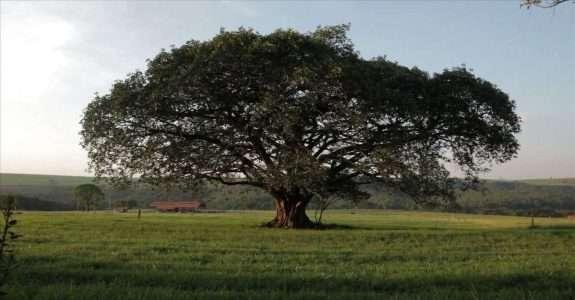 Fazenda da Toca – Agrofloresta em Grande Escala apresentada pela Agenda Gotsch