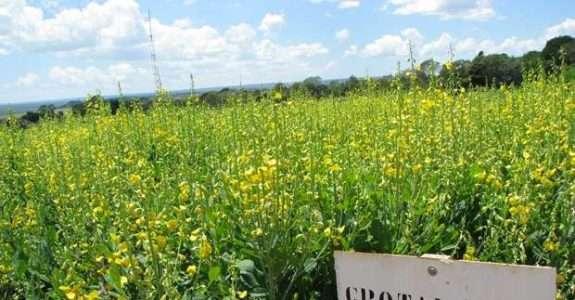 Fitossanitários têm uso aprovado para agricultura orgânica