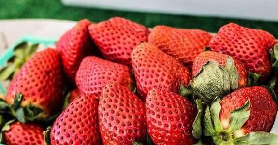 Agricultores de AL têm certificação de alimentos orgânicos