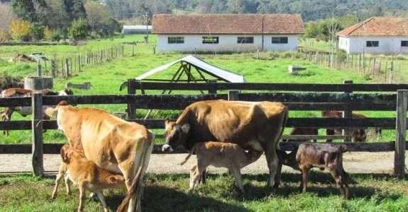 Leite e carne orgânicos têm maior teor de ômega-3, diz estudo
