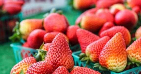 Agricultores orgânicos criam técnica sustentável e eficiente para plantio de morango