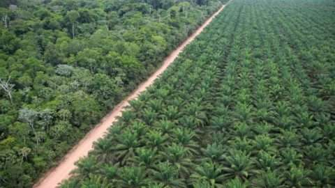 agropalma-cultivo-640x426