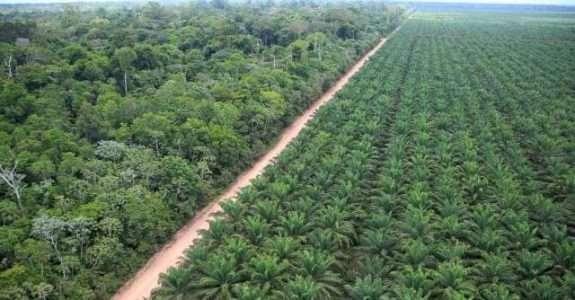 Óleo de palma: produção sustentável garante prêmio internacional ao Brasil