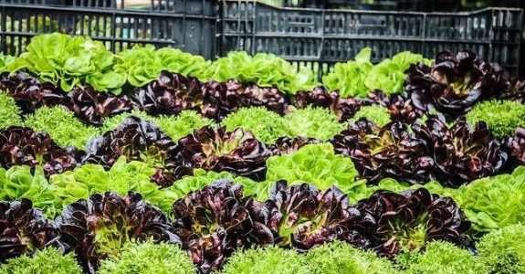 Distribuição de hortaliças na agricultura familiar: uma análise das transações