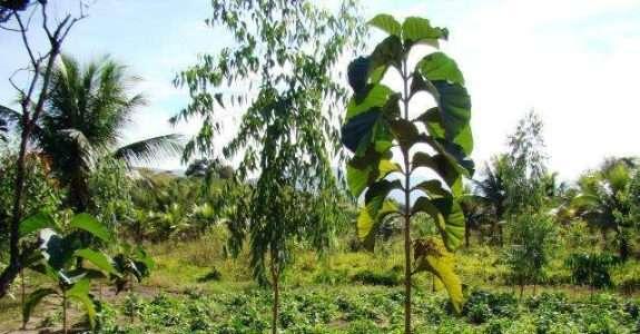 Banco de dados de espécies agroflorestais