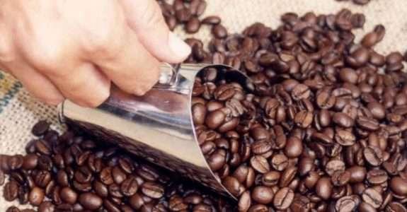 Perfil socioeconômico produtores de café orgânico do ES