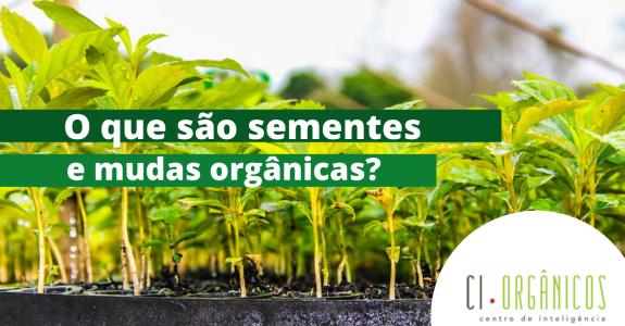 Sementes e mudas, insumos da produção orgânica