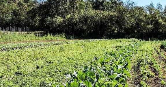 Conversão de produção convencional para produção orgânica