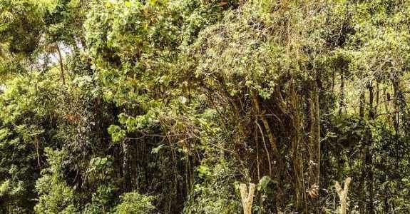 Sistemas agroflorestais: aspectos básicos e recomendações