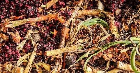 Comparação de composto orgânico de Barcarena com adubos orgânicos