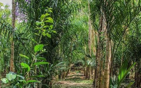 Agroecologia: conservação da natureza e valorização da vida