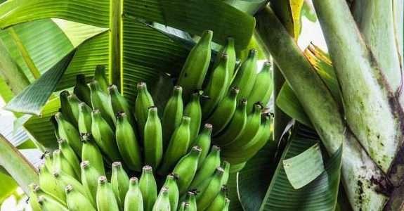 Produtos Sociobiodiversidade: Caderno de Normas Fiscais, Sanitárias e Ambientais