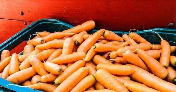 MAPA atualiza regulamento para produção de orgânicos no Brasil