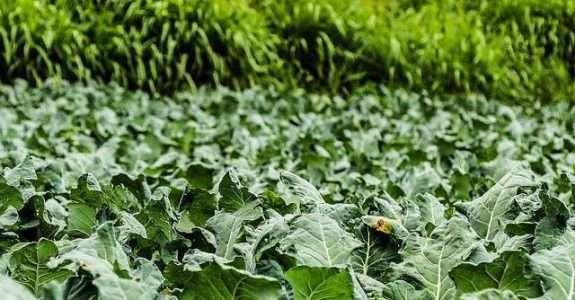 Controle biológico: o futuro da agricultura já começou