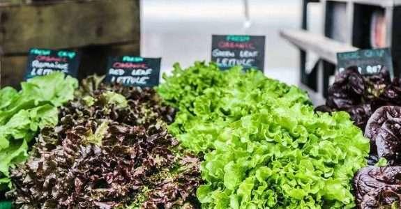 Projeto pioneiro rastreará a origem de vegetais orgânicos
