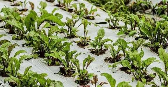 Embrapa lança e-book sobre cultivo de hortas em pequenos espaços