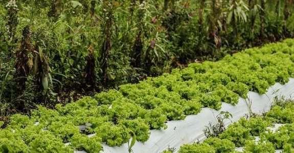 Visando o aumento da produção orgânica, especialistas defendem mais subsídios para o setor