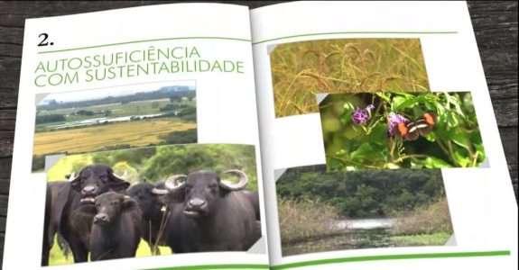 Fazenda gaúcha produz arroz de qualidade sem agrotóxico e adubos convencionais