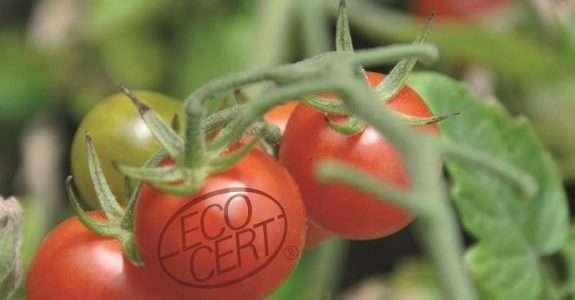 Brasil está à frente do mercado de orgânicos na América Latina
