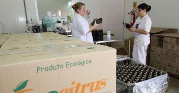 Citros orgânicos da Ecocitrus ganham mercado internacional