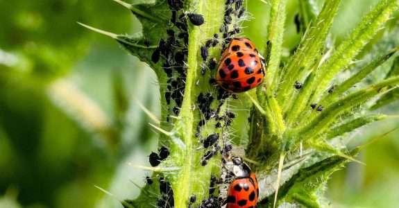 Biodefensivos com micróbios do solo e planta são o futuro