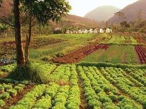 Alimento orgânico: o sonho da autossuficiência