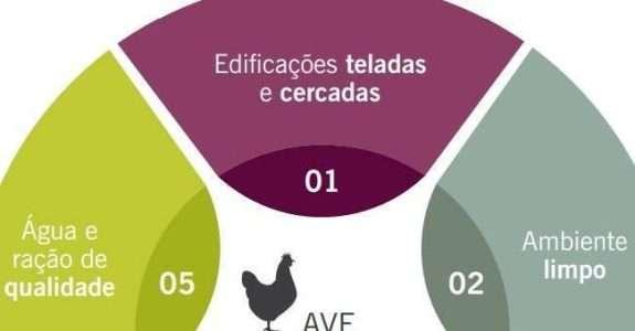Recomendações básicas de Biosseguridade para pequena escala de produção avícola